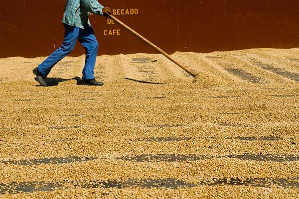Occupational Health and Safety in Costa Rican Coffee Production